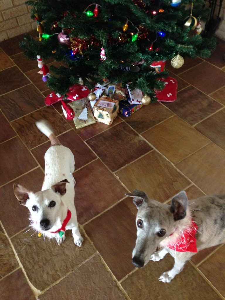 Dogs by christmas tree