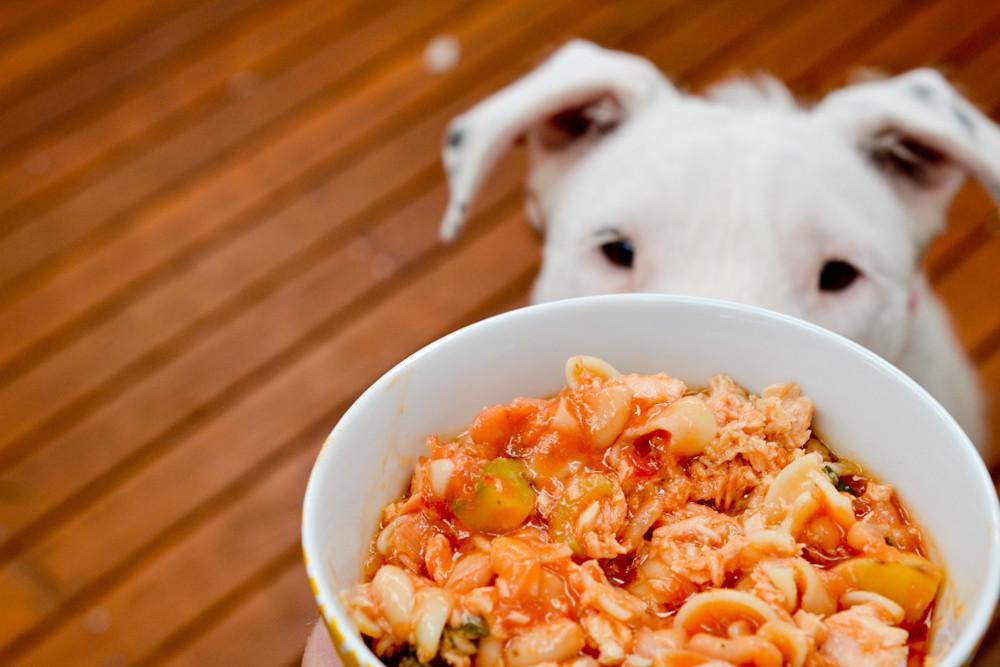 Dog holly looking at food