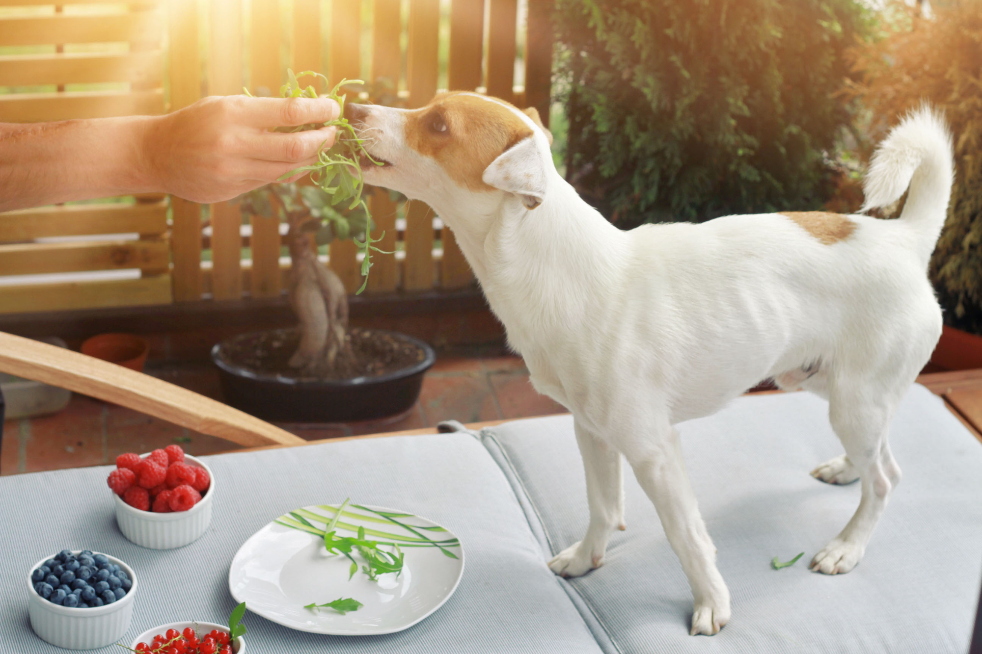 Benefits Of Dogs Eating Blueberries